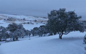 Snow near Sonoita, AZ