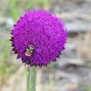 Flower and bee. Photo taken around Greer, AZ