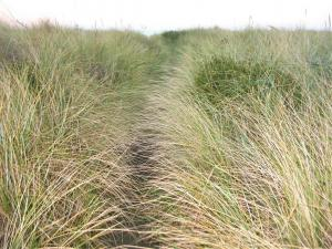 Pathway thru the grass